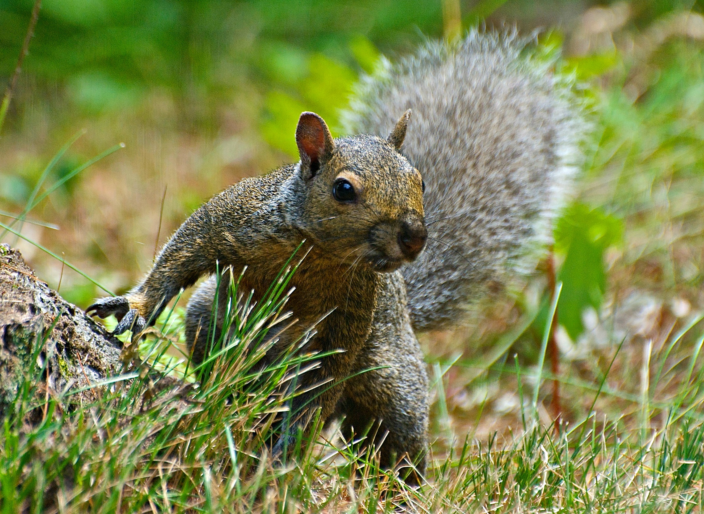 Small Mammals And Birds Are Important Accomplices In