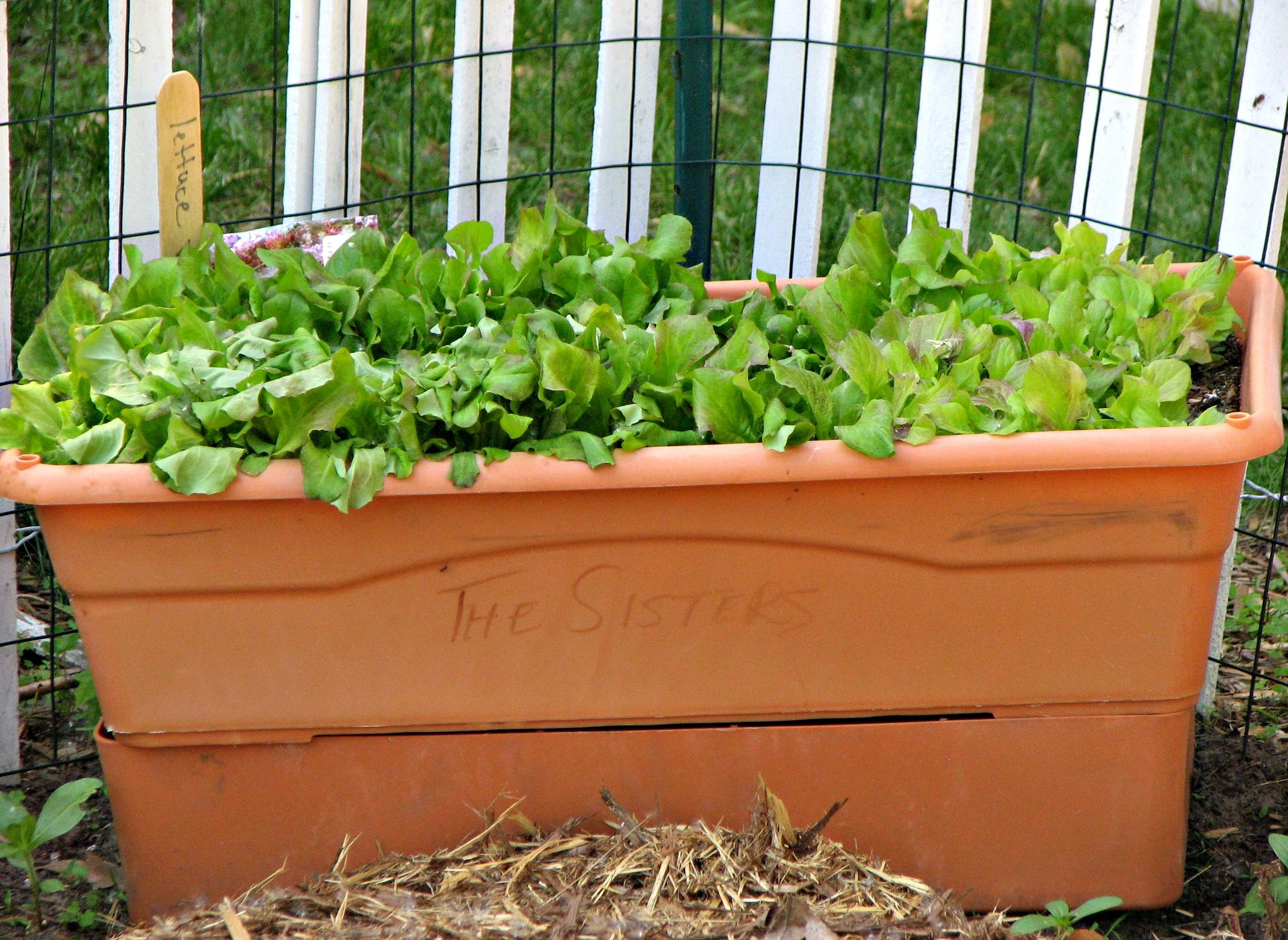 How To Get A Good Start With Container Gardening
