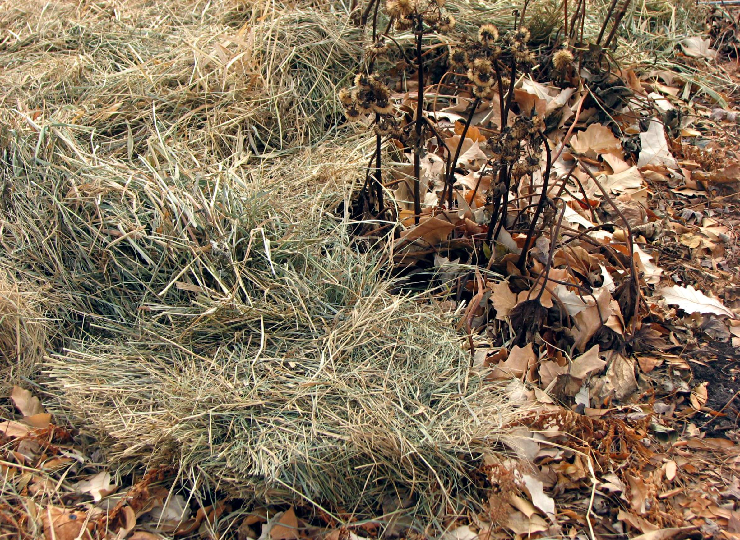 Winter Mulch Is A Protective Blanket For Landscape Plants | WisContext