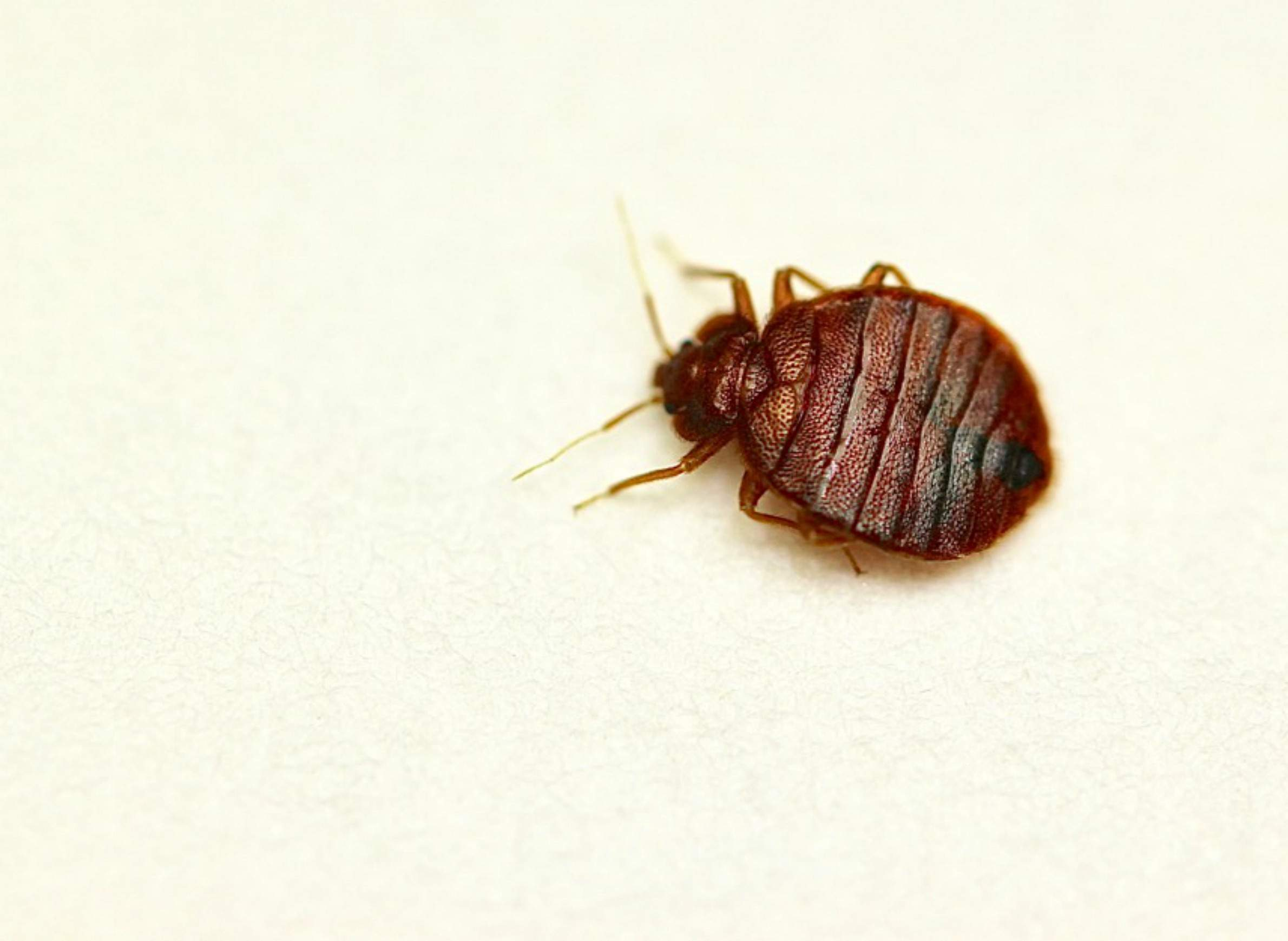. Don t Let The Bed Bugs Hitchhike   WisContext