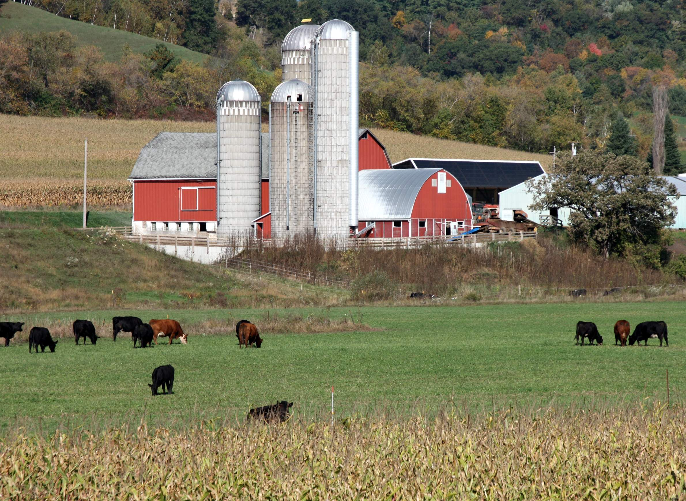 Image result for dairy farm
