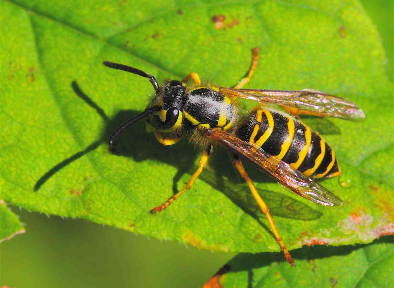 wisconsin s top 10 trends of 2017 for insects and other pests