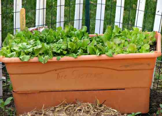 Series: Growing Container Gardens   WisContext